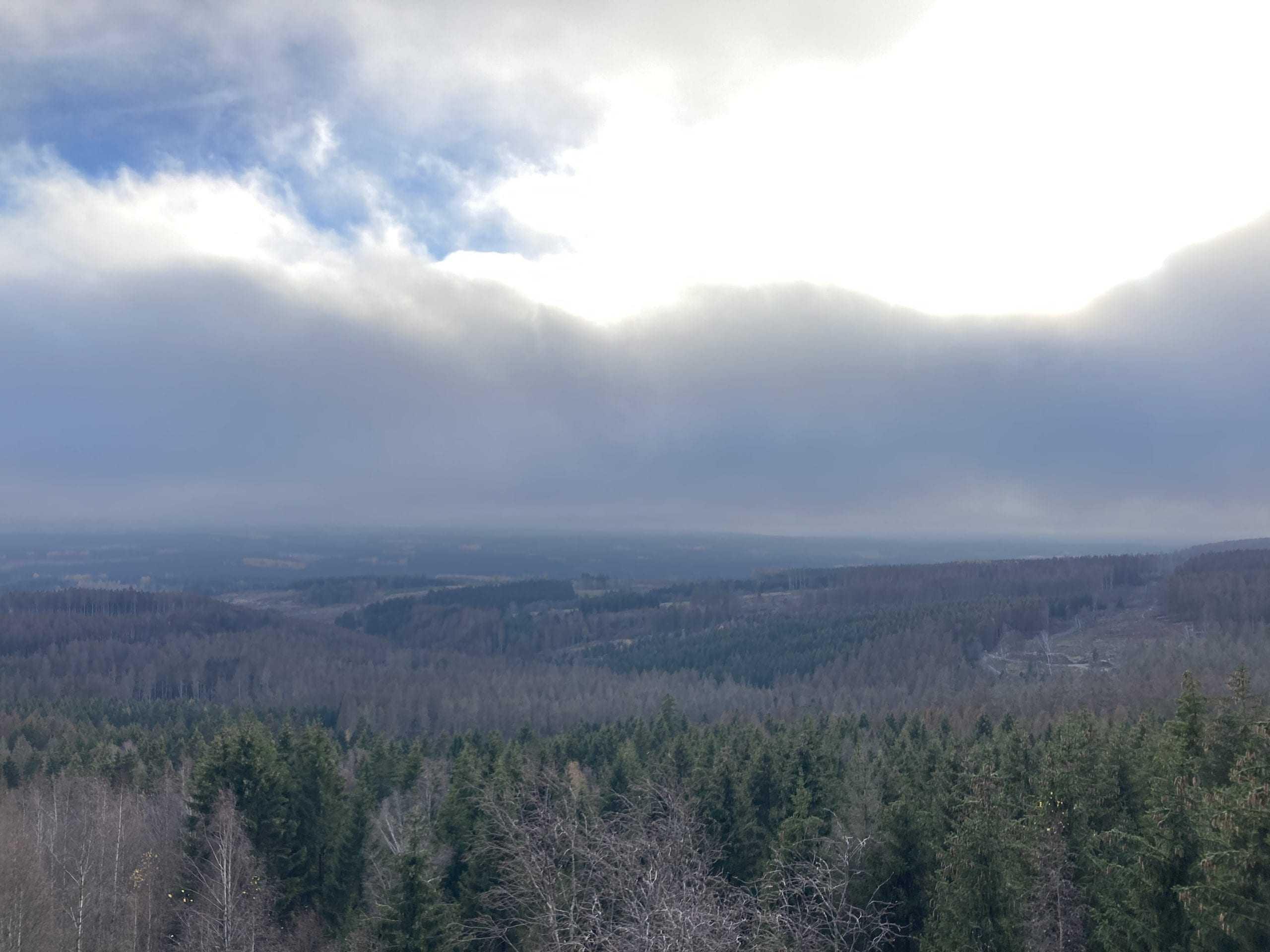 lick auf den Nationalpark Harz in dem ein weitläufiges Waldsterben durch den Klimawandel stark beschleunigt wird